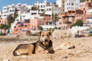 cani-uccisi-marocco-mondiali
