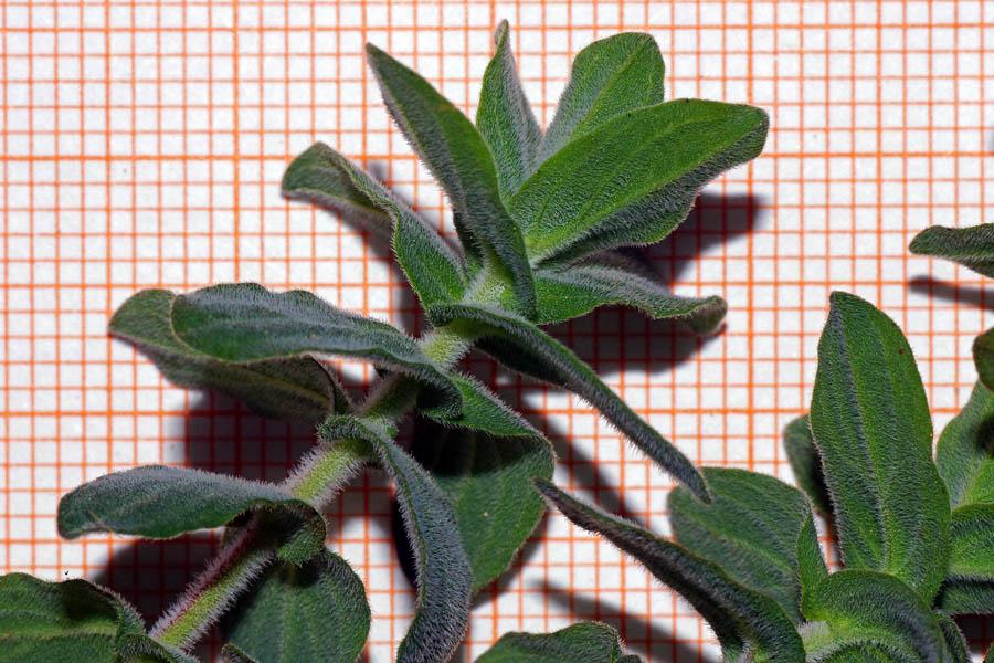 hiv-cura-pianta-sardegna