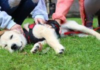 Bufala no vax sull'autismo nei cani
