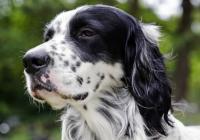 Carabiniere ritrova il cane rubato