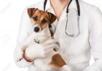 Cani e gatti curati gratis dai veterinari: la proposta di legge