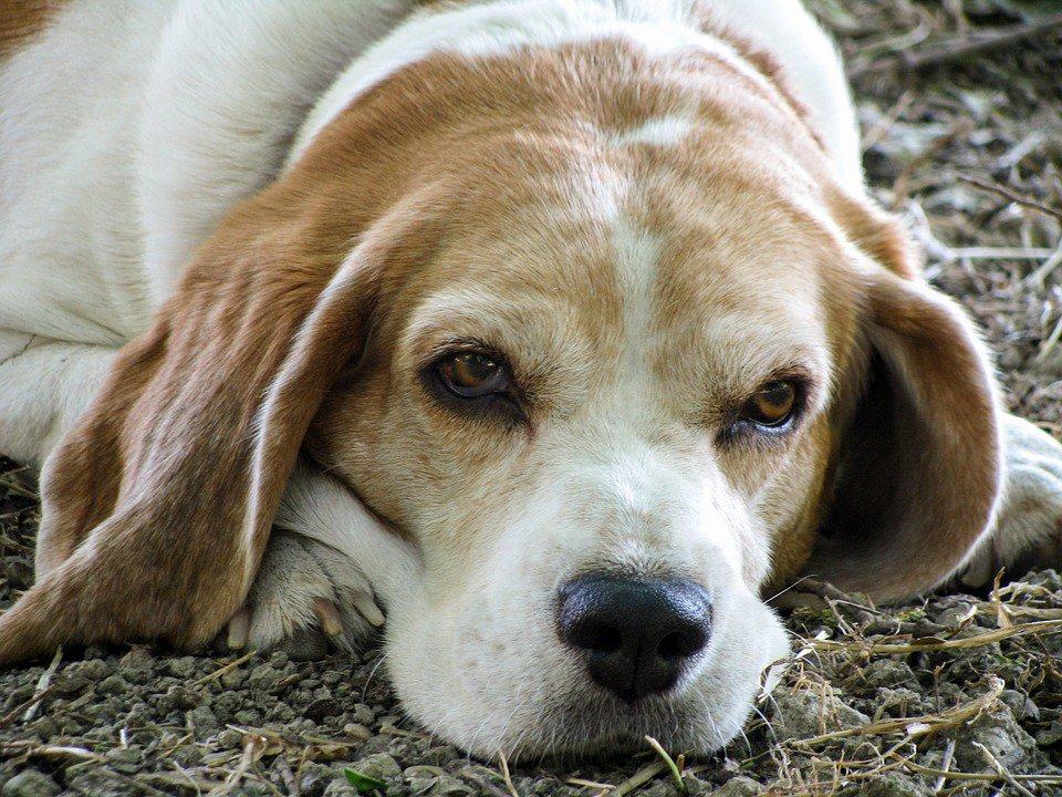 I cani non sono così intelligenti come si pensa: lo rivela una ricerca
