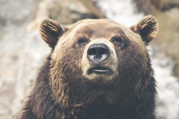 Canada, orso grizzly uccide mamma e figlia