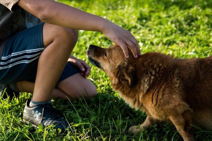 cane geolocalizzato nella tana dell'istrice