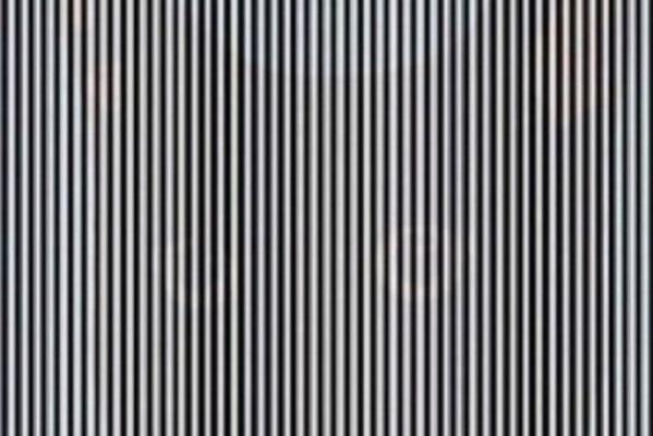 illusione ottica strisce animale nascosto