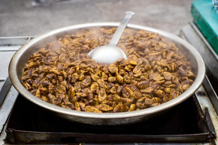 insetti in cucina