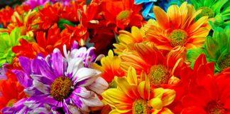 perchè-non-ci-sono-fiori-sanremo