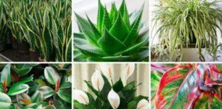 piante purificatrici che fanno bene alla salute