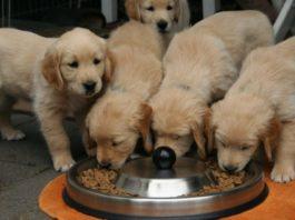 Alimentazione del cucciolo