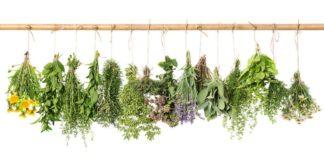 piante-officinali-dettagli-conservazione